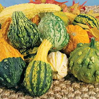 Fancy Fall Mix Gourd Seeds