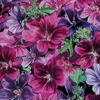 Mystic Merlin Hollyhock Mallow Seeds