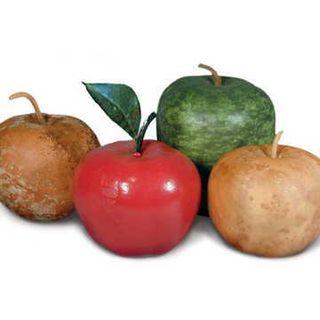 Big Apple Gourd Seeds