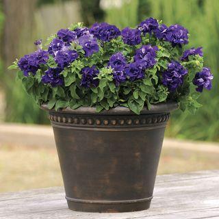 Double Cascade Blue Hybrid Petunia Seeds