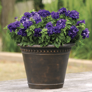 Double Cascade Blue Hybrid Petunia Seeds