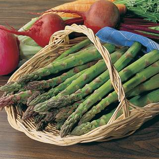 Jersey Knight Hybrid Asparagus Seeds