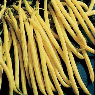 Rocdor Bean Seeds