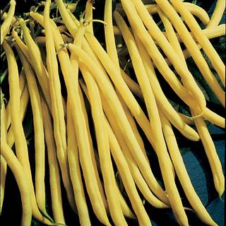 Rocdor Bush Bean Seeds