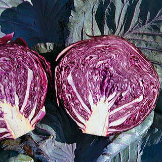 Cairo Hybrid Cabbage Seeds