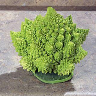 Veronica Cauliflower Seeds
