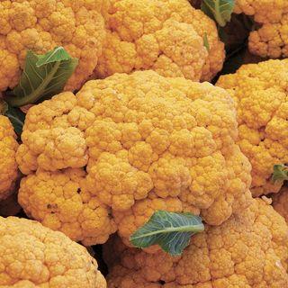 Cheddar Hybrid Cauliflower