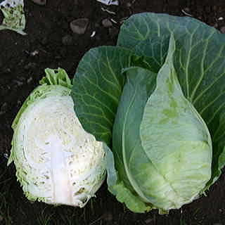 Caraflex Hybrid Cabbage Seeds