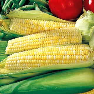 Ambrosia Hybrid Corn Seeds