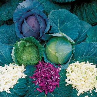Parks All-Purpose Blend Cabbage Seeds