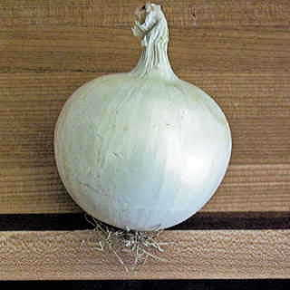 Whitewing Hybrid Onion Seeds