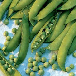 Mr. Big Pea Seeds