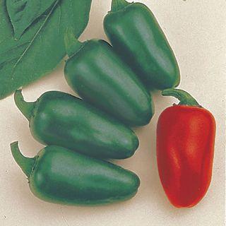 Jalapeno M Pepper Seeds