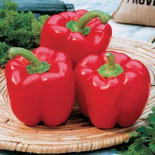 Karma Hybrid Pepper Seeds
