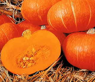 Sunshine Hybrid Winter Squash Seeds