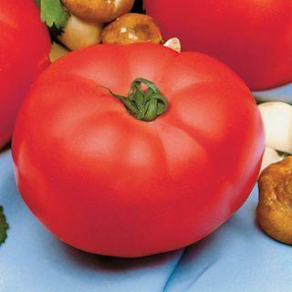 Beefmaster Hybrid Tomato Seeds