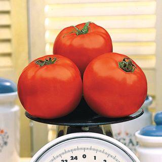 Beefy Boy™ Hybrid Tomato Seeds