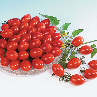 Sugary Tomato Seeds
