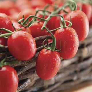 Cupid Hybrid Tomato Seeds