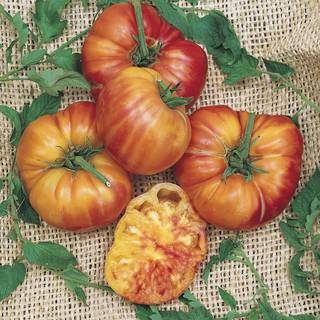 big rainbow tomato seeds from park seed. Black Bedroom Furniture Sets. Home Design Ideas