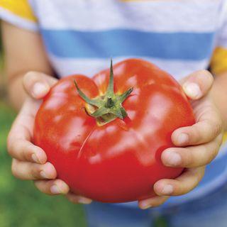 Big Beef Hybrid Tomato Seeds