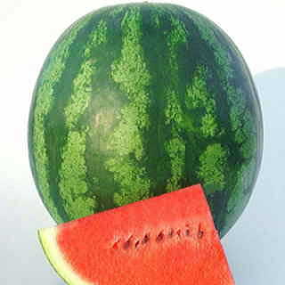 Shiny Boy Hybrid Watermelon Seeds