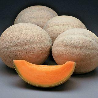 Athena Hybrid Melon Cantaloupe Seeds