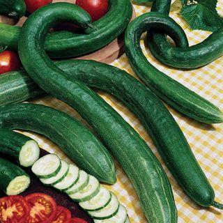 Early Spring Burpless Hybrid Cucumber Seeds