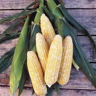 Know Before You Grow: Corn