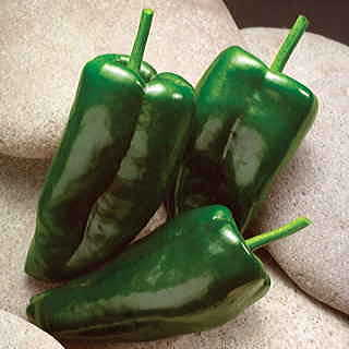 Caballero Hybrid Pepper Seeds