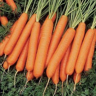 Nelson Hybrid Carrot Seeds