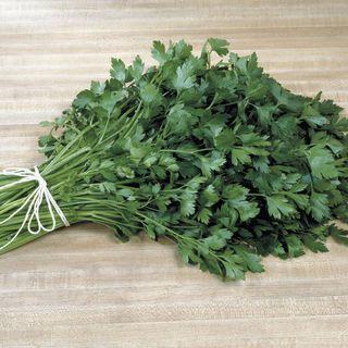 Italian Plain Leaf Parsley Seeds
