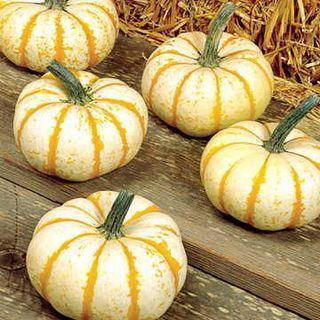 Lil Pumpkemon Pumpkin Seeds