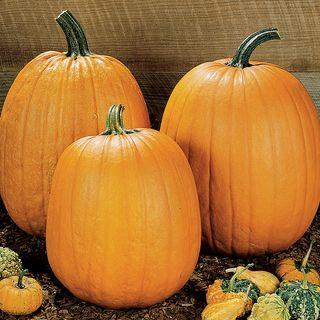 Howden Pumpkin Seeds