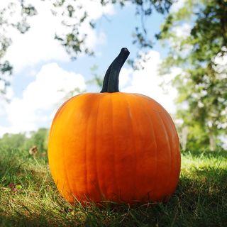 Hijinks Hybrid Pumpkin Seeds