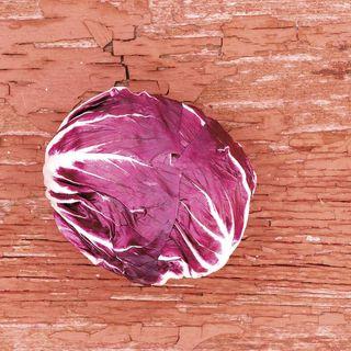 Indigo Hybrid Radicchio Seeds