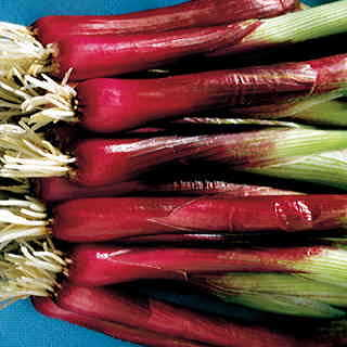Red Baron Hybrid Onion Seeds