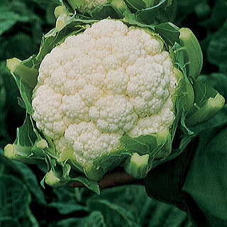 Amazing Cauliflower Seeds
