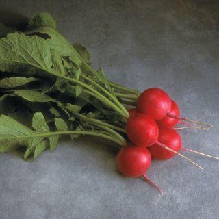 Cherriette Hybrid Radish Seeds