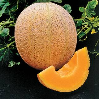 Hales Best Organic Melon Seeds