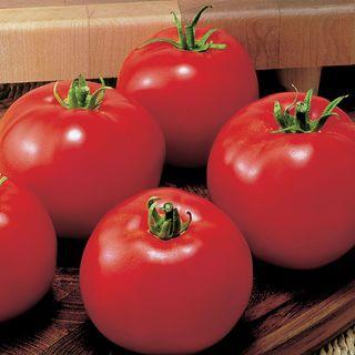 MoneyMaker Organic Tomato Seeds