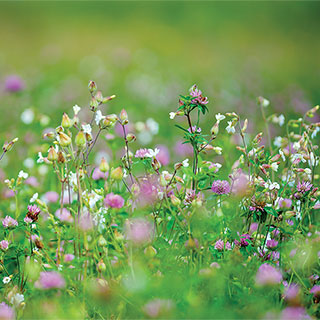 Parks Organic Cover Crop Seeds