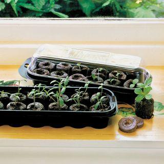 Jiffy Regular Windowsill Greenhouse