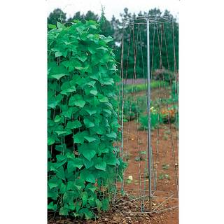 Pole Bean Growing Tower Image