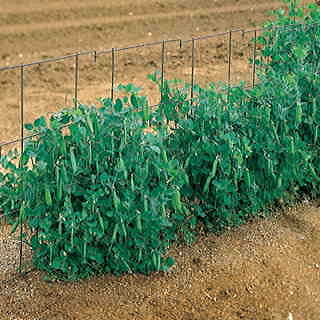 Pea Fence - 14 Foot