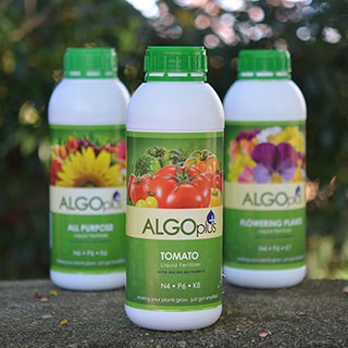 AlgoPlus Tomato Fertilizer Image