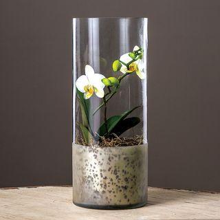 Elegant Orchid Bulb Garden