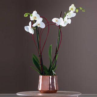 Exquisite Orchids