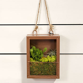Shop All Terrarium Gifts