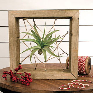 ToTilly Floating Air Plant